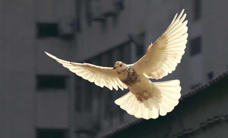 Is Peace Elusive?   Our Daily Bread Ministries